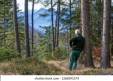 A mountain hiker in the Tyrolean Alps leans against a tree in the forest and enjoys the magnificent view of the mountains of the mountain range Mieminger Kette.