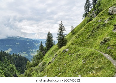 Mountain hiking route among trees and meadow stiff slope