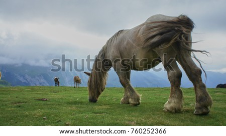 Mountain Horses of the French Pyrenees