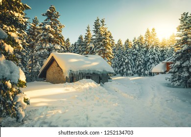 Mountain hut in the snowy pine forest. Snowy pine forest in sunset. Uludag National Park, Bursa.