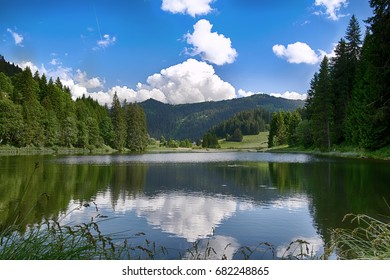 mountain lake with green big trees  in the summer in Switzerland