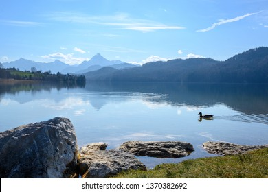 mountain lake weissensee in morning light in front of the the bavarian alps near fuessen in the allgaeu, southern germany, copy space, selected focus