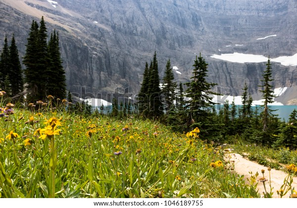 Mountain Lake and Wildflowers