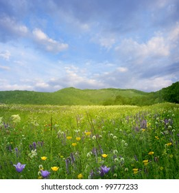 Mountain landscape with flowers