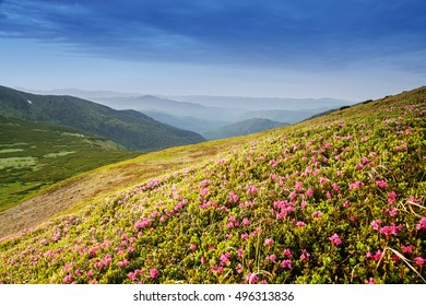 Mountain landscape with flowers crocus at foreground.