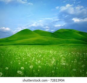 Mountain landscape with flowers field