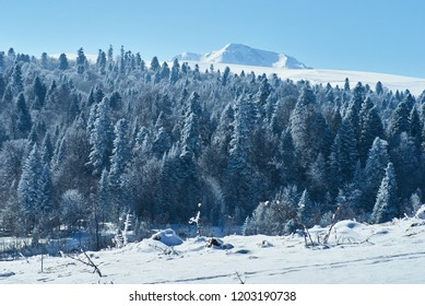 Mountain landscape. In the foreground there is a glade, on the middle a forest, behind the snow-covered peaks of the mountains. Beautiful blue sky. Lago-Naki, The Main Caucasian Ridge, Russia