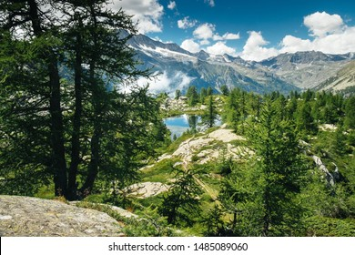 Mountain landscape with a lake and green trees around. Sense of freedom. Gran Paradiso National Park, Bellagarda lake, Ceresole Reale, Piedmont, Italy