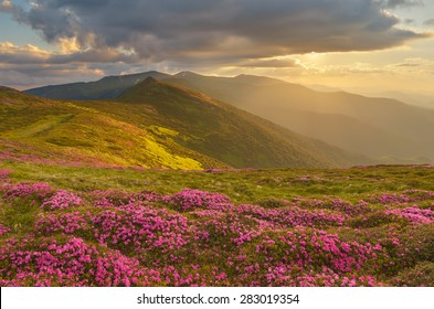 Mountain landscape with the magical light of the sun. Flowers rhododendron. Beauty in nature