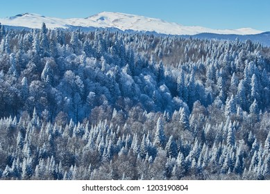 Mountain landscape. On the front and middle ground there is a forest, behind the snow-covered peaks of the mountains. Beautiful blue sky. Lago-Naki, The Main Caucasian Ridge, Russia