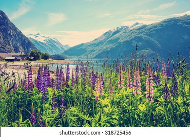 mountain landscape with  pink lupine in the background, Norway