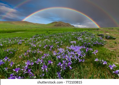 Mountain landscape with a rainbow over flowers.