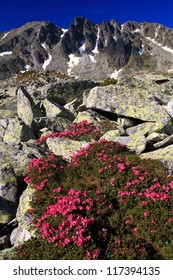 Mountain landscape with red flowers (rhododendron), Retezat National Park, Romania