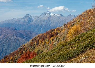 """Mountain landscape. Russia, Sochi, resort """"Krasnaya Polyana"""". In the mountains of the Caucasus come autumn. Vibrant fall colors of alpine meadows and foothills."""