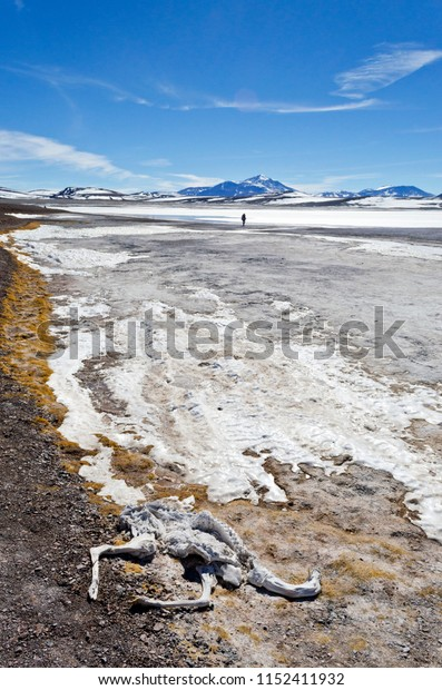 mountain landscape with vicuña skeleton in Laguna Brava, Argentina