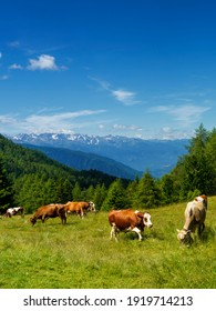 Mountain landscape at summer along the road to Mortirolo pass, in Brescia province, Lombardy, Italy. Pastures