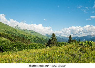 mountain landscape summer forests meadows grass flowers sky clouds mesmerizing panorama Caucasian ridge flowering greenery