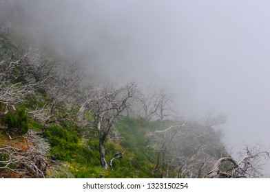 Mountain landscape. View of mountains and dry trees in the fog on the route Pico Areeiro - Pico Ruivo, Madeira Island, Portugal, Europe.