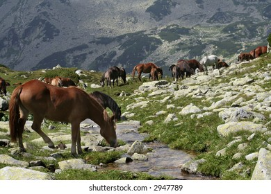 Mountain landscape with wild horses in summer time