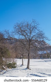 Mountain lanscape with tree and snow under sun