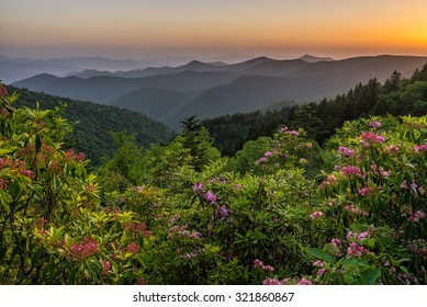 Mountain Laurel bask in the soft evening light with the Blue Ridge Mountains layered out in the background.
