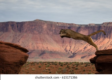 Mountain Lion Jumping Red Rock