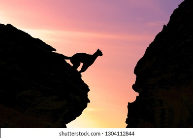 mountain lion jumping sunrise