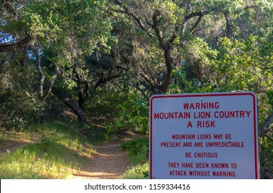 Mountain Lion Warning Sign Along a Tree Covered Hiking Trail in O'Neill Regional Park, CA