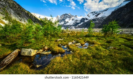 Mountain Meadow at Lake of the Hanging Glacier in the Purcell Mountains, British Columbia, Canada