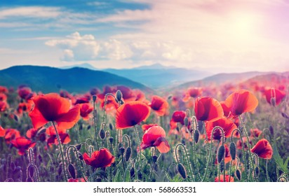 mountain meadow with poppy flowers. soft light effect. instagram filter.