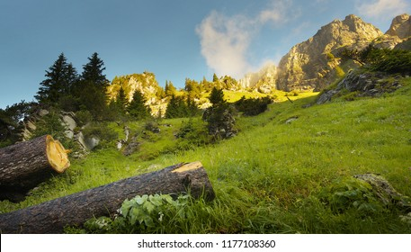 Mountain meadow with rocks on background and spruce logs on foreground