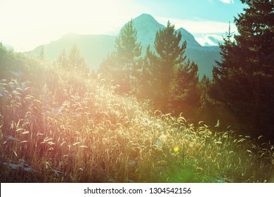 Mountain meadow in sunny day. Natural summer landscape.