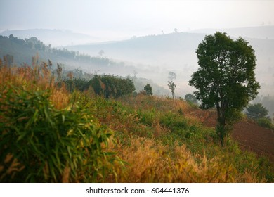 Mountain meadow in Thailand