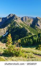 mountain meadow in Washington State