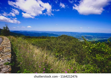 mountain outlook with flowers