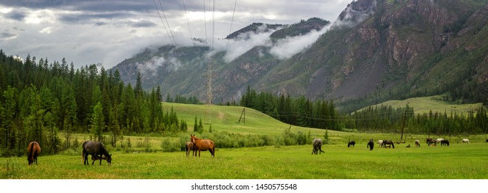 mountain panorama in Altai with a herd of horses in the valley, Russia, June