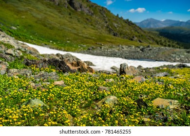 Mountain pass - flowers and snow, Altay, Siberia, Russia, Autumn