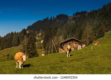 mountain pasture in Engstligental south of Adelboden, Frutigen-Niedersimmental, Bernese Oberland, Switzerland
