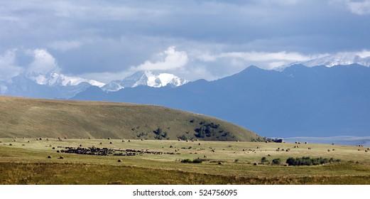 Mountain pasture in the foothills of Mount Elbrus, Karachay-Cherkessia, Russia.