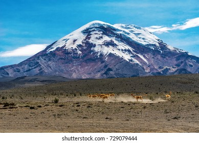 mountain pasture near the volcano Chimborazo at an altitude of 4200 meters.