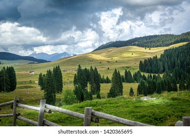 A mountain pasture in summertime, Asiago