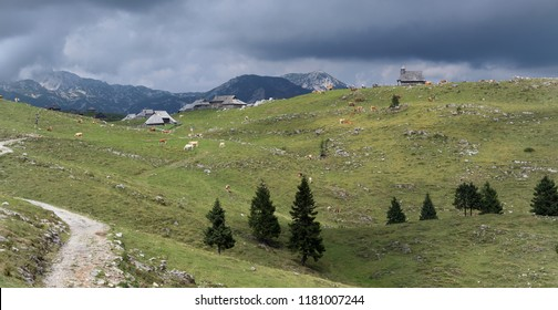 Mountain pastures on Velika planina in Kamnik Alps in Slovenia. Landscape with mountain style christian chapel, pasturing cows, high mountains in background, meadows and dirt path.