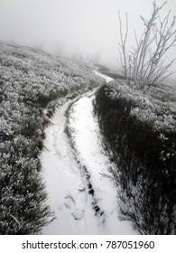 Mountain path, Bieszczady, winter, Poland.