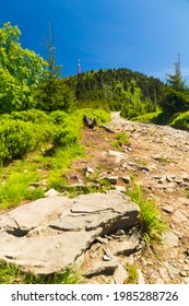 Mountain path from Lysa Hora summit, Beskydy, Czech republic, Europe - Shutterstock ID 1985288726
