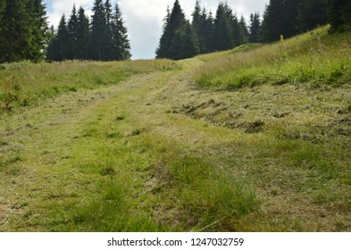 Mountain path with pine trees in summer