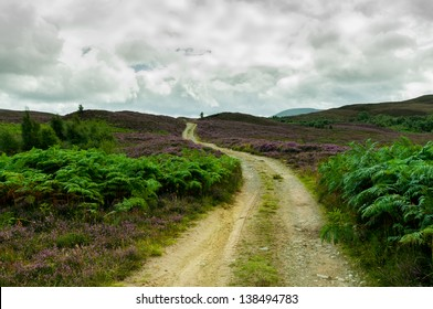 Mountain path through green plants