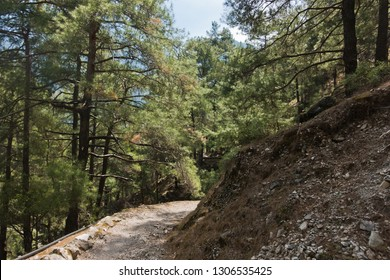Mountain path through pine forest at Samaria gorge, south west part of Crete island, Greece