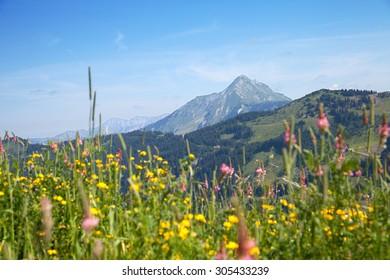 mountain peak over Alpine meadows