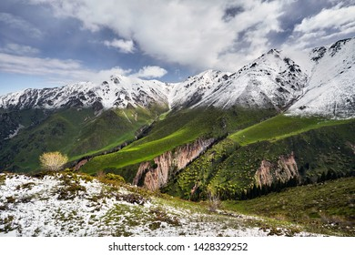Mountain peak with snow and green forest against blue cloudy sky