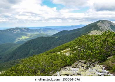 Mountain peak Synyak covered with alpine pines and scree of big green stones  with moss on mountain slopes grey clouds. Ukraine Gorgany.
